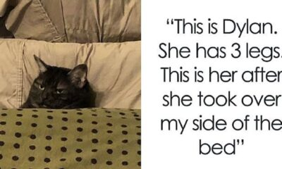 18 Funny Moments Cat Owners Realized How Mean Their Cats Actually Are 1